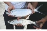 讓微生物更給力 為農畜水產增產創價