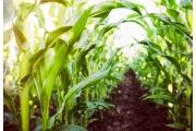 健康微生物菌叢創造農畜水產的安全與綠金