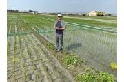 間歇灌溉省水逾30% 農民可用手機遠端操作代替巡田水
